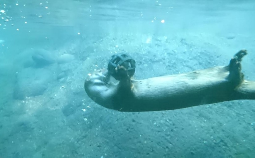 Oregon Zoo otter