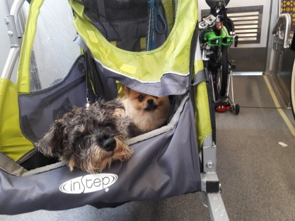 puppies in a stroller