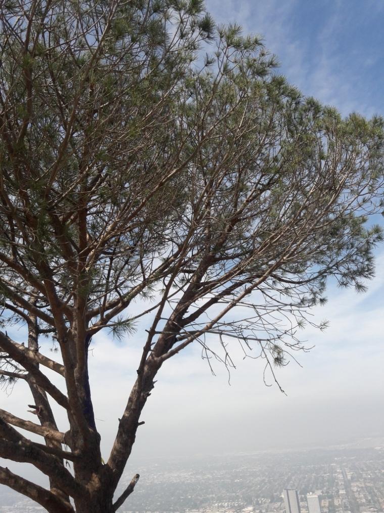 Wisdom Tree Tree of Life
