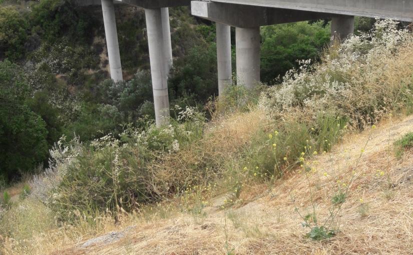 Hike 23/52 Porter Ranch Trails#3