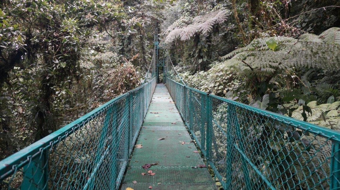 costa rica monterverde cloud forest