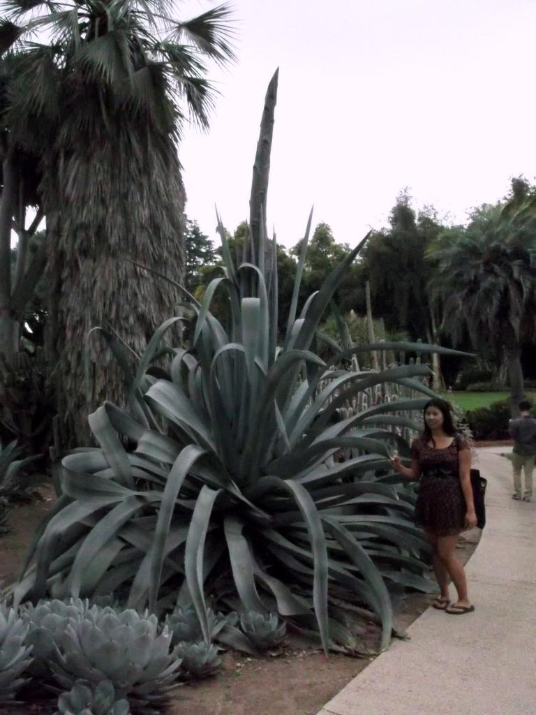 giant agave plant