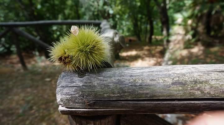 Land Urchins