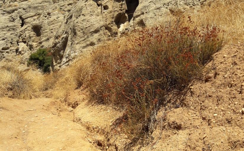 Hike 35/52: Cave ofMunits