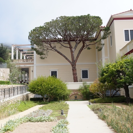 getty villa malibu entry tree