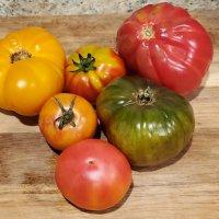 Tomatoes around the world