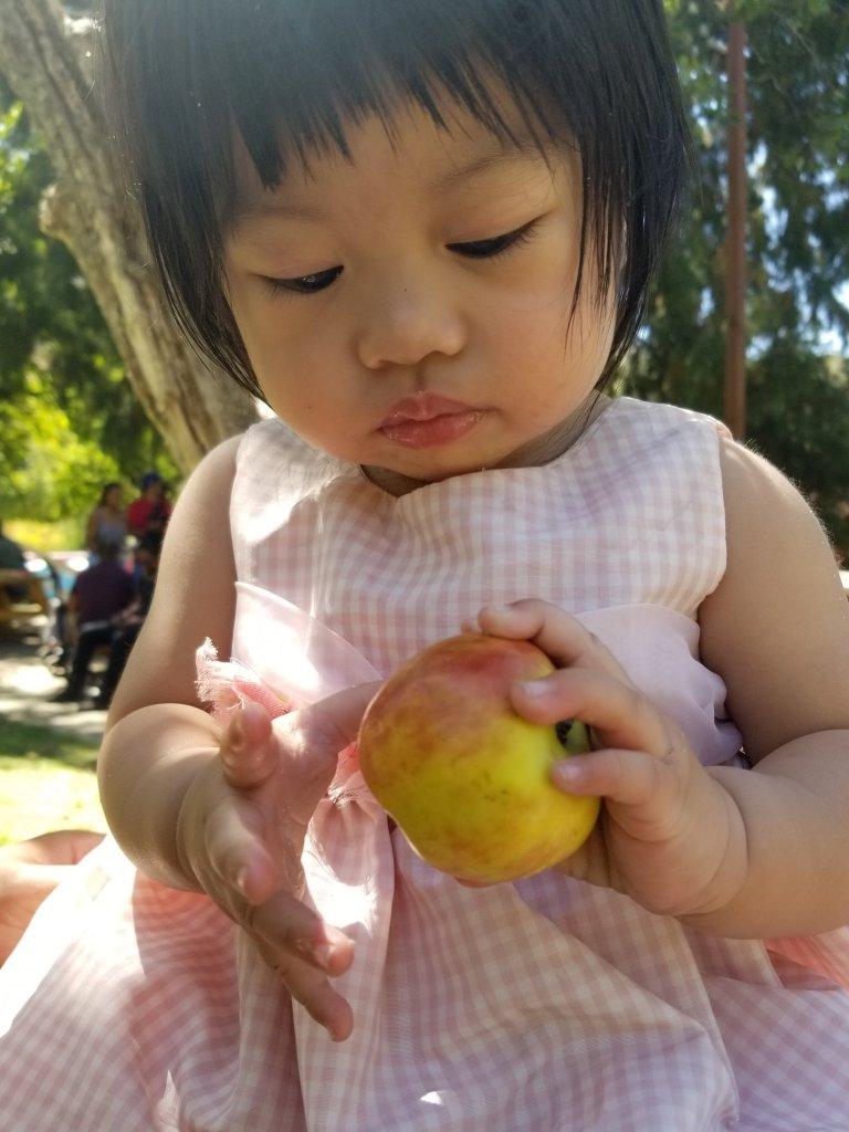 baby holding gravenstein apple